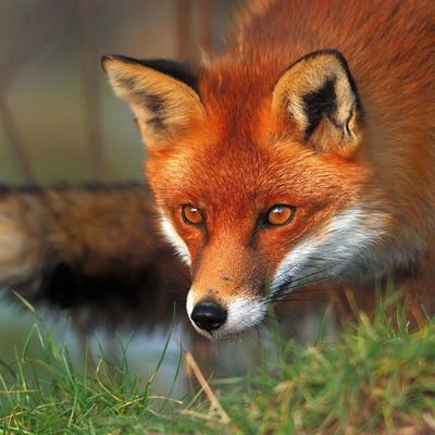 Дикие животные активизировались в Москве и Подмосковье