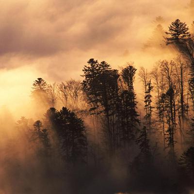 Площадь лесных пожаров в Забайкалье за сутки сократилась в 21 раз