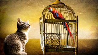 Кот и попугай /pxhere.com/