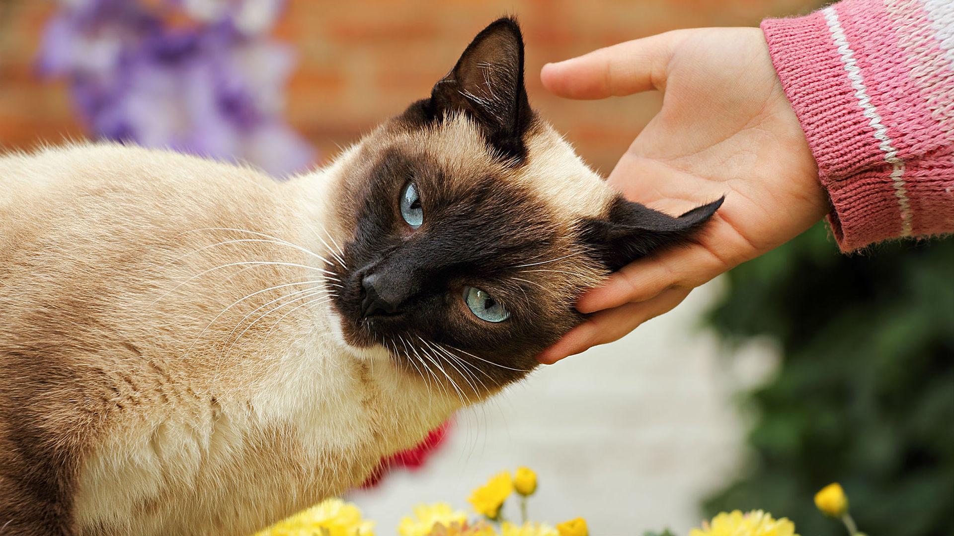 может ли кошка заразить человека гриппом вести наука