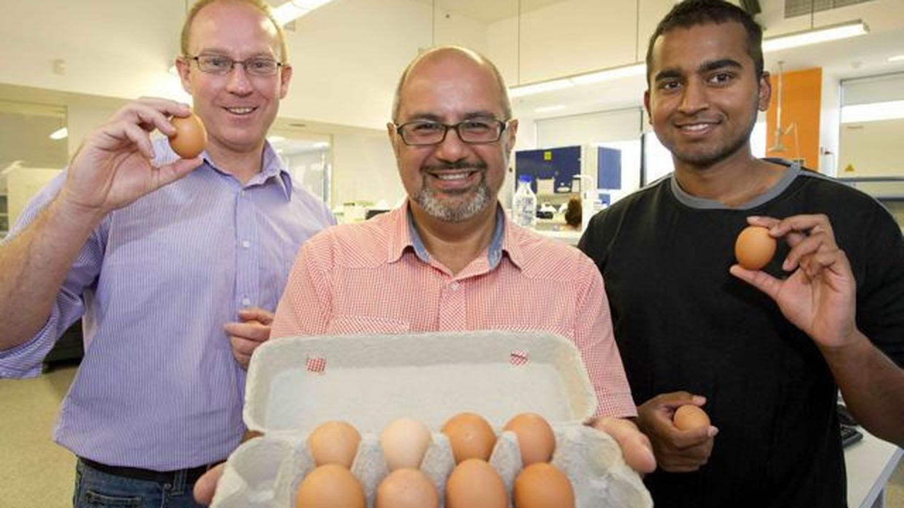 Австралийцы вырастили гипоаллергенных куриц, несущих безопасные яйца