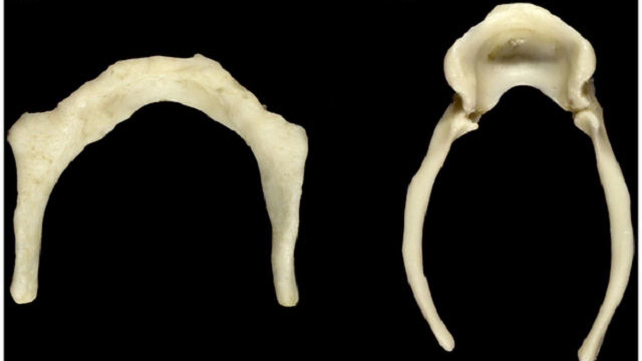 Неандертальцы умели разговаривать