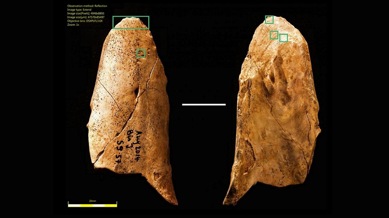 Неандертальцы развивались так же, как люди