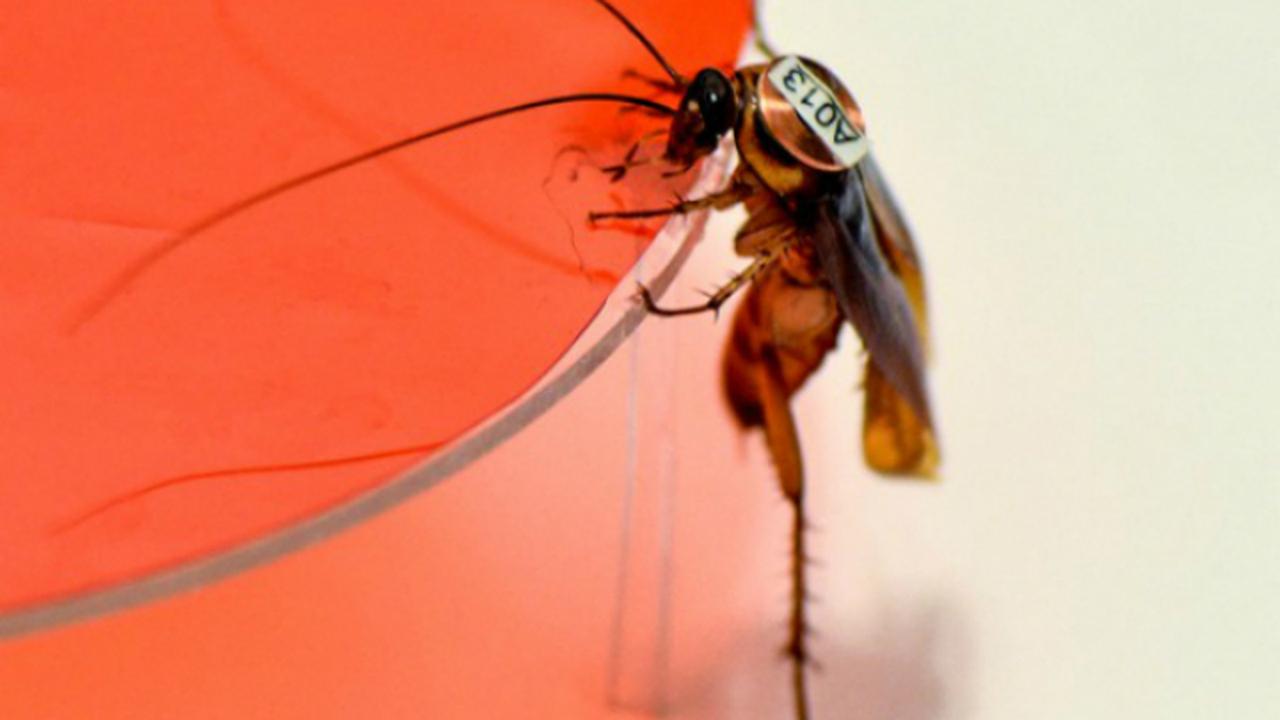 Каждый таракан – уникальная личность