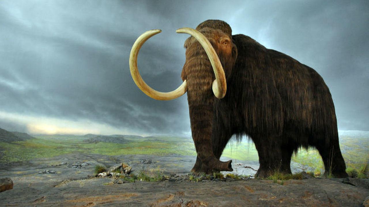 В попытке возродить мамонта его гены внедрили слону