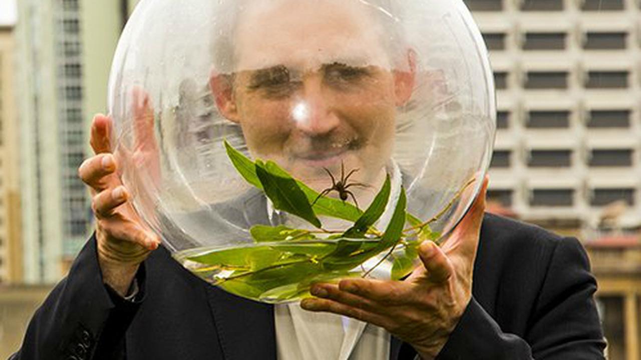 Обнаруженный в Австралии паук плавает и охотится на рыбу
