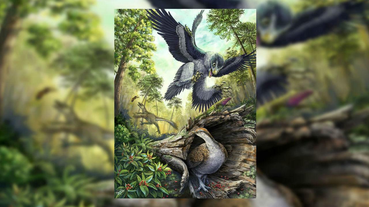 Семена и орехи спасли предков птиц от вымирания, динозаврам повезло меньше