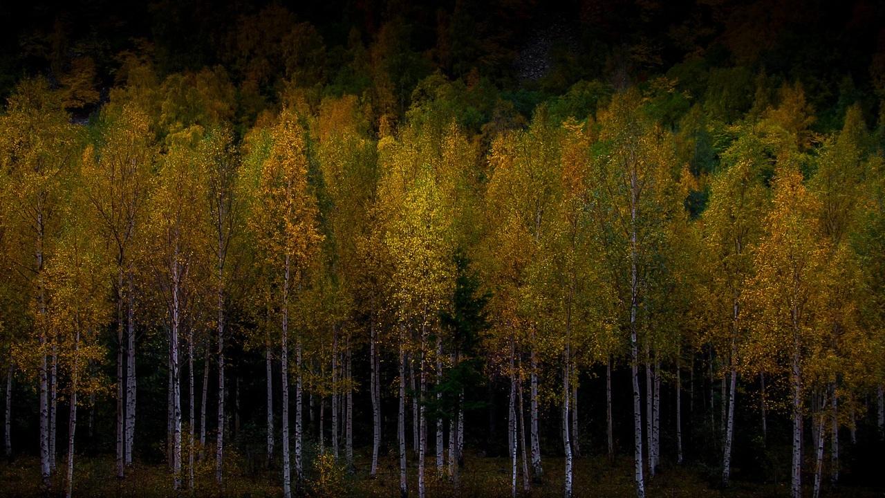 Спят усталые деревья: учёные рассказали о ночном сне ветвей и листьев