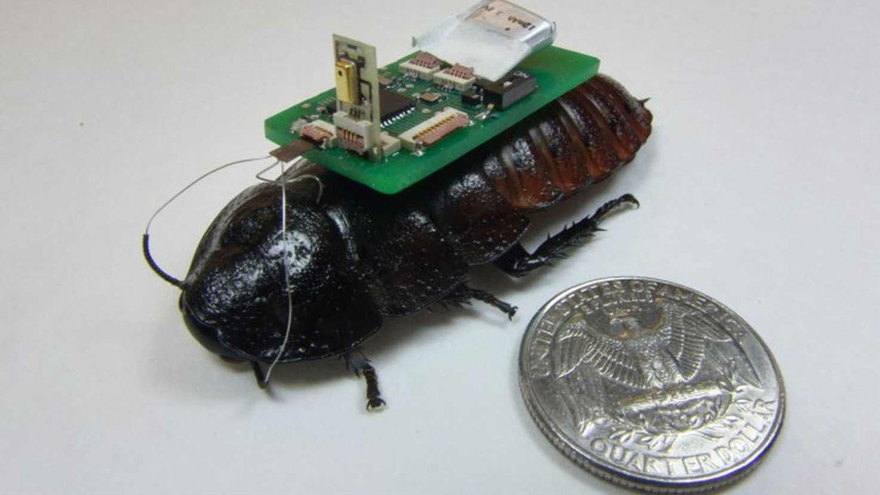 Тараканы-киборги в компании дрона-наблюдателя будут искать выживших в стихийных бедствиях