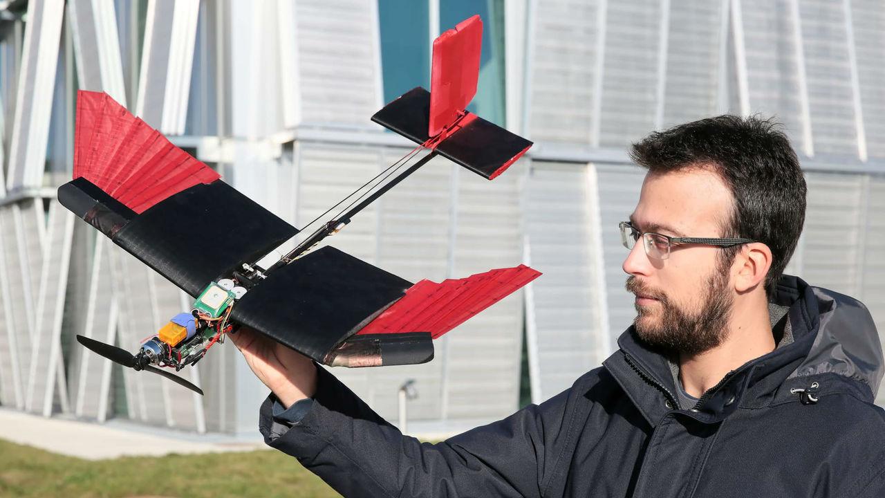 Главное - не перепутать: новых дронов оснастили перьями для полёта даже при сильном ветре