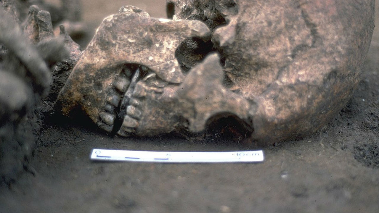 Обнаружены останки человека с камнем вместо отрубленного языка