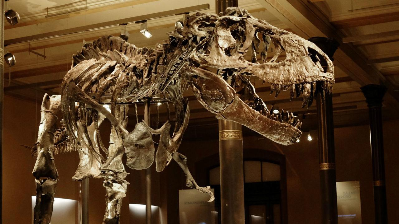 """Палеонтологи провели """"капремонт"""" фамильного древа динозавров и стряхнули тирекса с его ветви"""