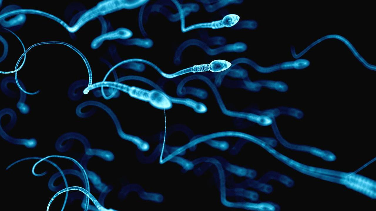 """Доставку лекарств при гинекологических болезнях доверят сперматозоидам в """"железных упряжках"""""""