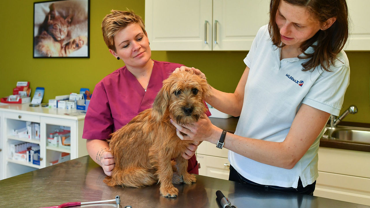 Томский препарат с наночастицами серебра помогает лечить чумку у собак