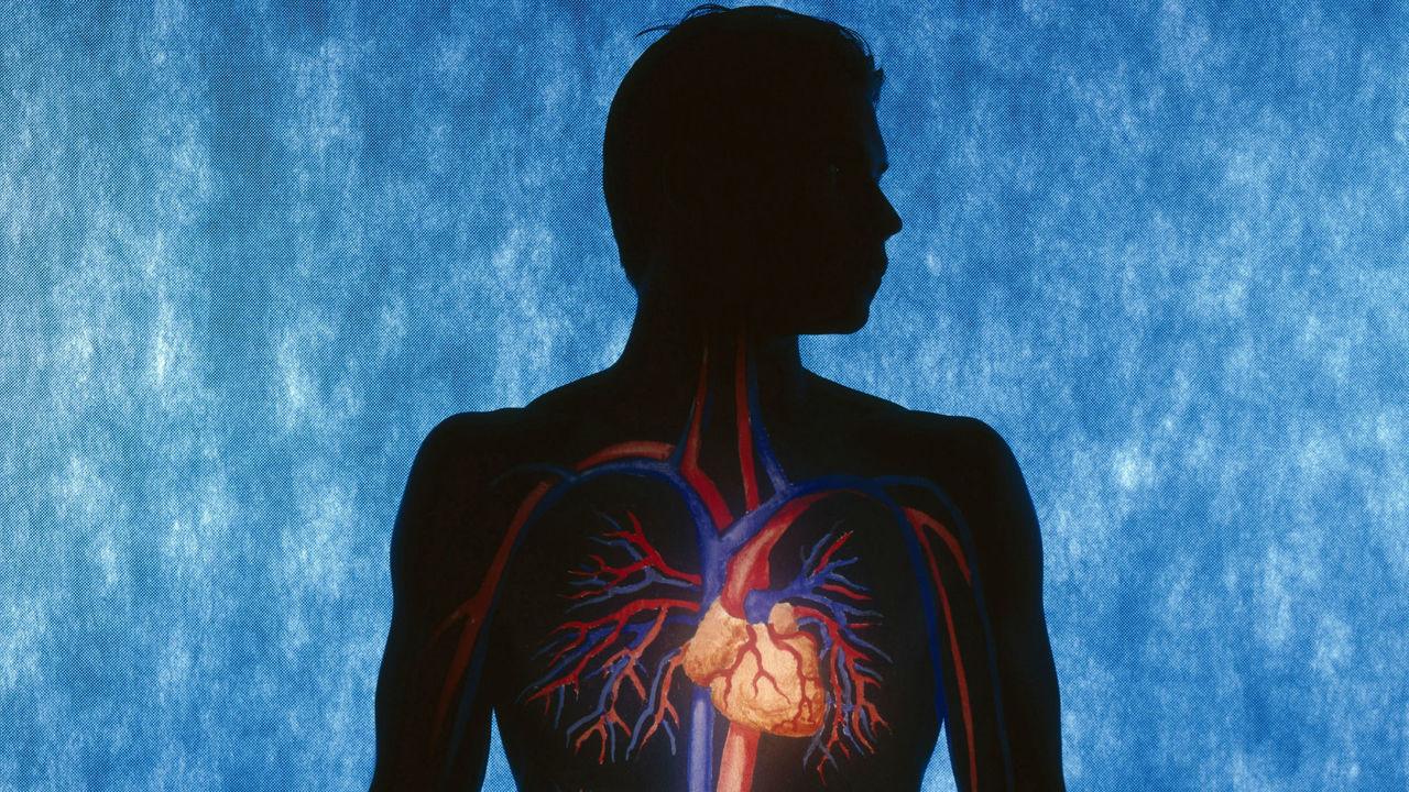 """Белок подлечит сердце, заставив его """"думать"""", что человек тренируется"""