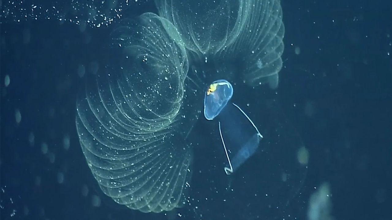 Ученые: наночастицы пластика наносят вред Мировому океану