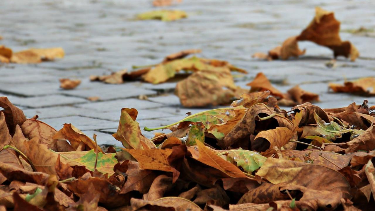 Осенняя электроника: опавшие листья превратят в органические конденсаторы
