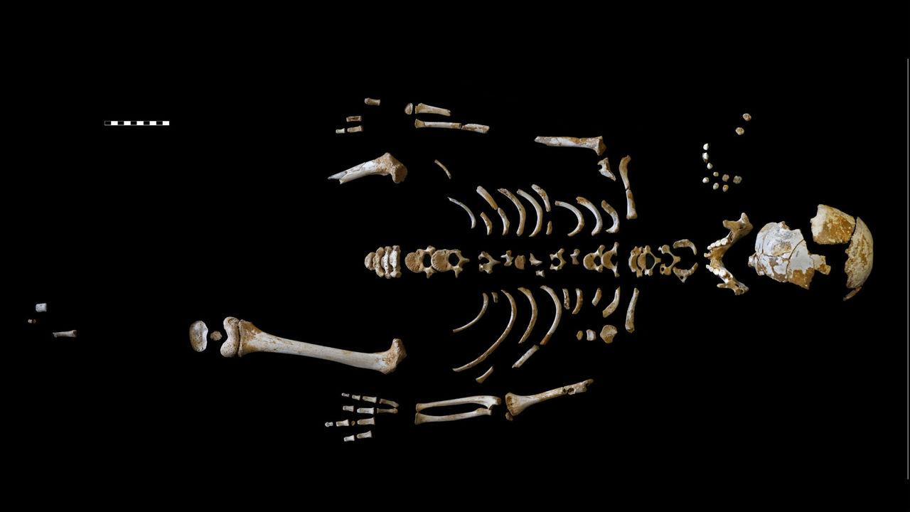 Неандертальское детство могло быть таким же долгим, как у человека разумного