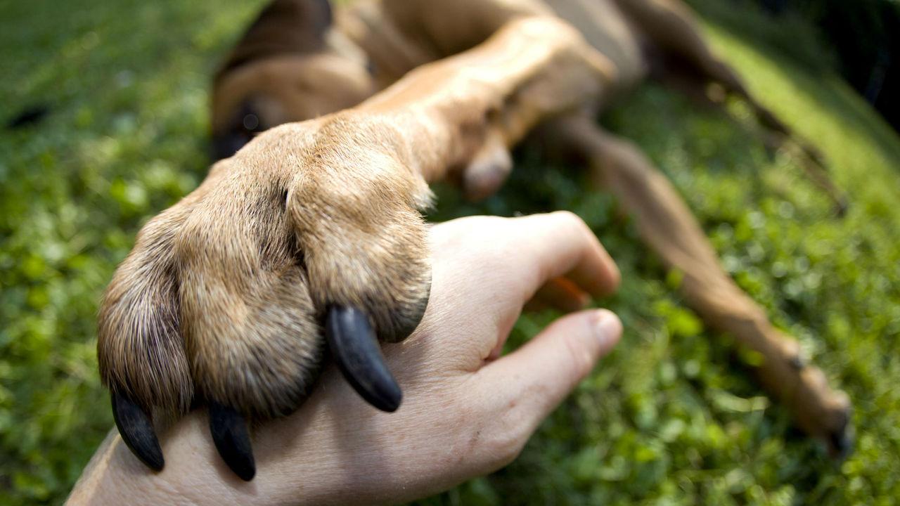 Собаки ощущают запах человеческого страха и начинают бояться вместе с ним