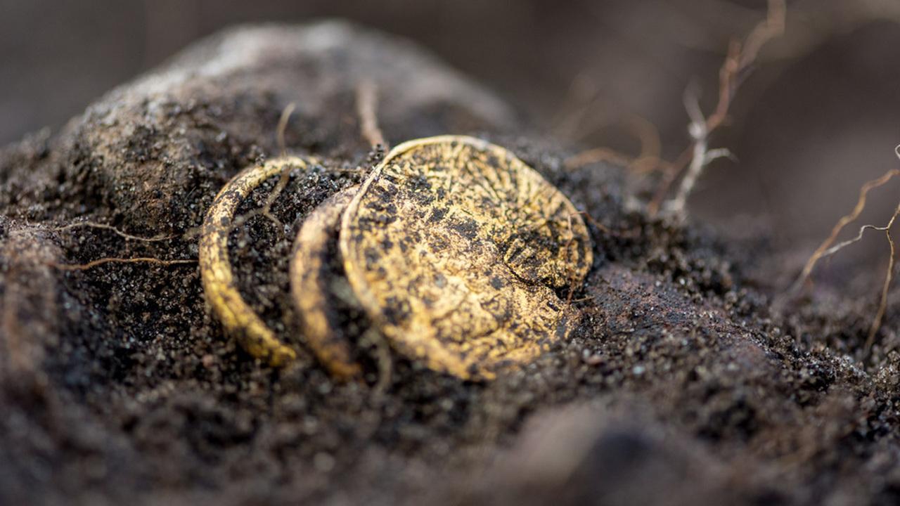 """В """"шведских Помпеях"""" археологи опять нашли кровавое золото"""