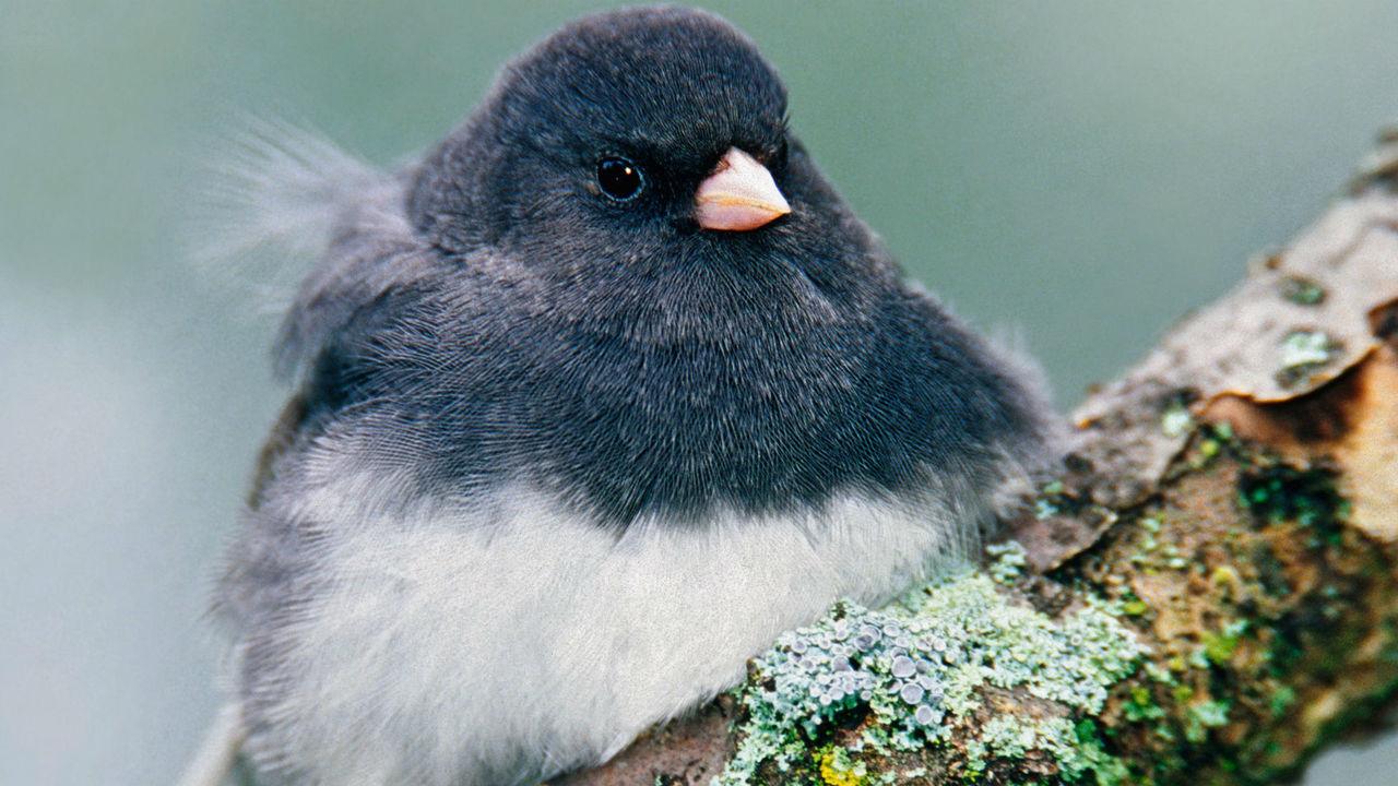 """Обычно молчащие самки птиц запели, чтобы отвадить конкуренток от """"супругов"""""""