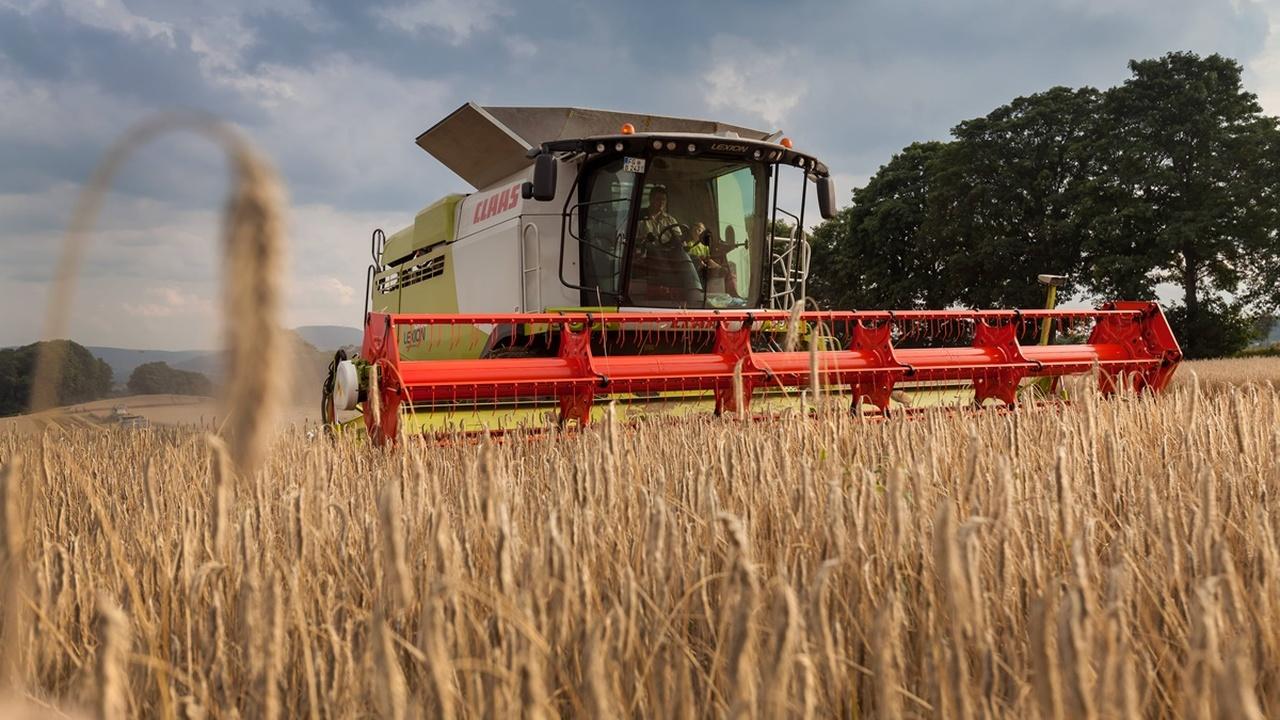 Свинец против селена: российские учёные научились спасать растения от загрязнённой почвы