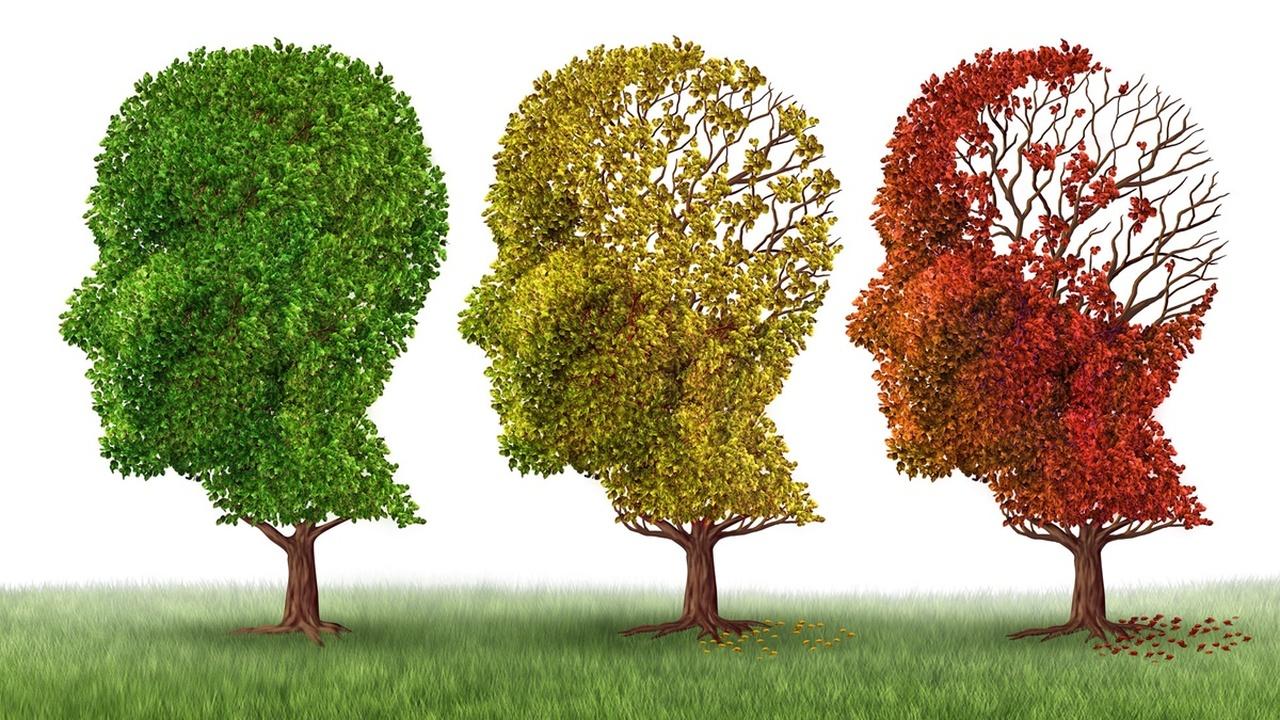Два в одном: препарат от сахарного диабета улучшил память мышей с болезнью Альцгеймера