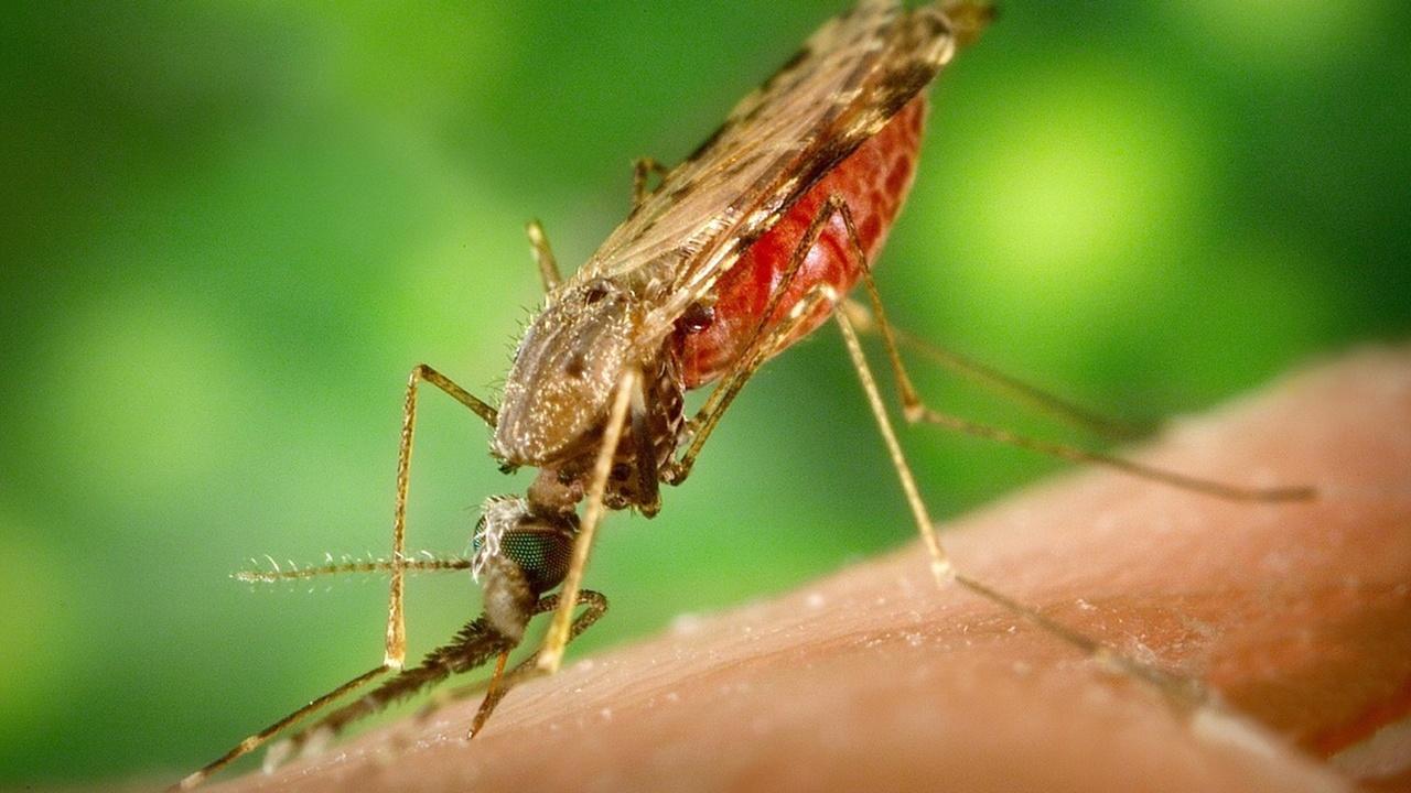 Робот-учёный открыл лекарство от малярии
