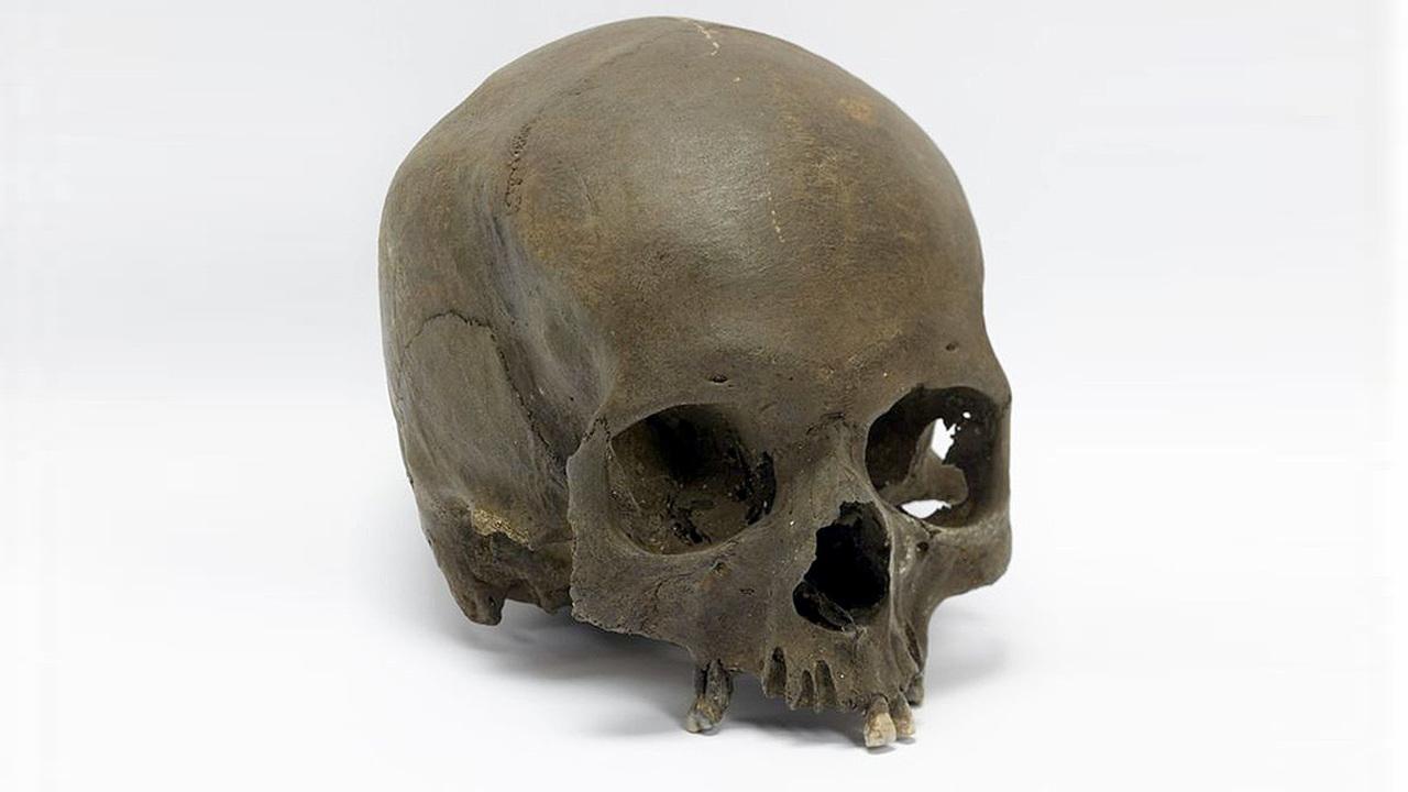 Череп, найденный собакой, мог принадлежать жертве священного ритуала железного века