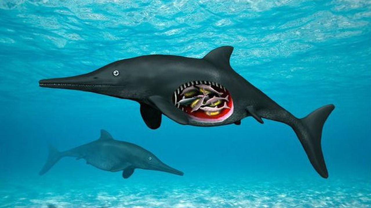 Найдены останки особи ихтиозавра, беременной на момент смерти восьмернёй