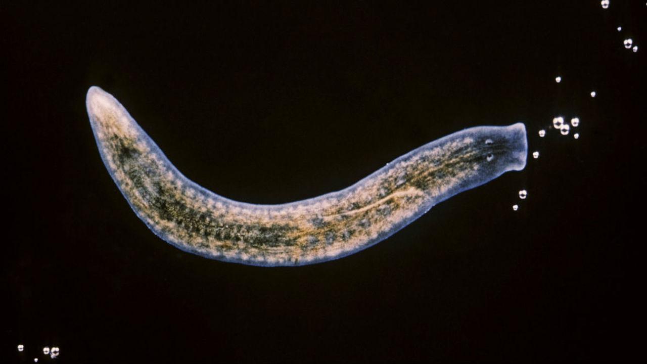 Биологи выделили клетку, из которой можно восстановить всё тело