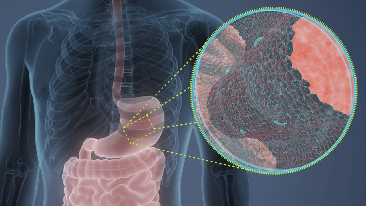 Новый кандидат в антибиотики: мощное противомикробное средство найдено в желудке человека