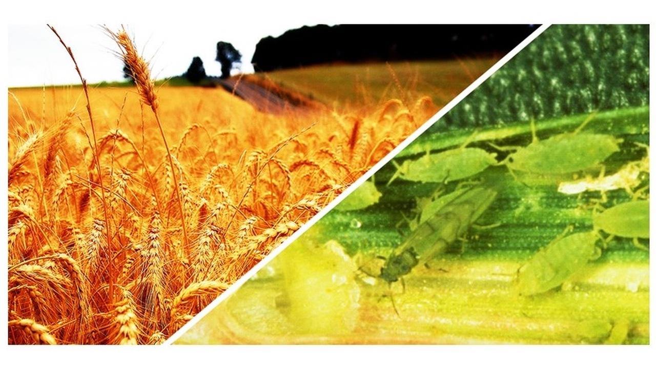 Глобальное потепление породит полчища голодных насекомых-вредителей