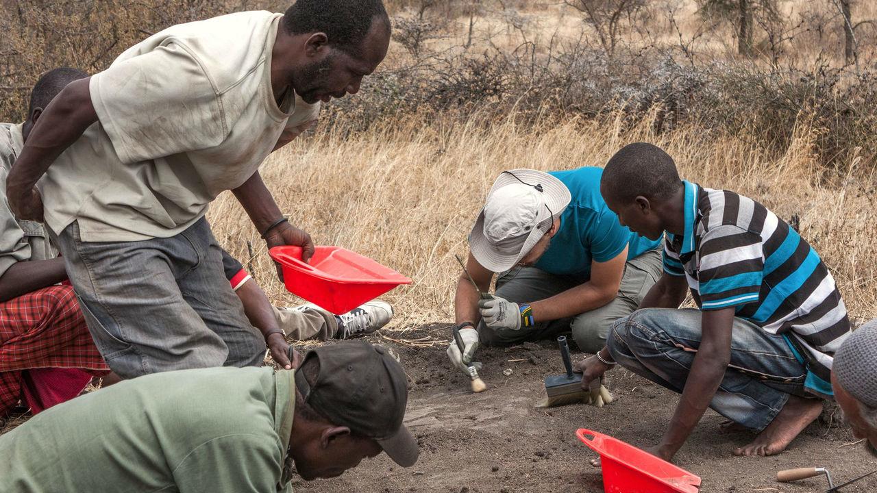 В Польше исследовали останки ребенка-неандертальца, съеденного птицей