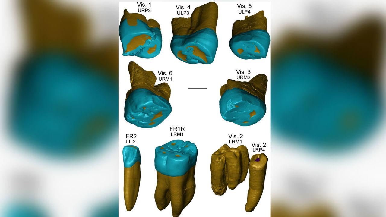 """""""Неандертальские"""" зубы появились задолго до неандертальцев"""