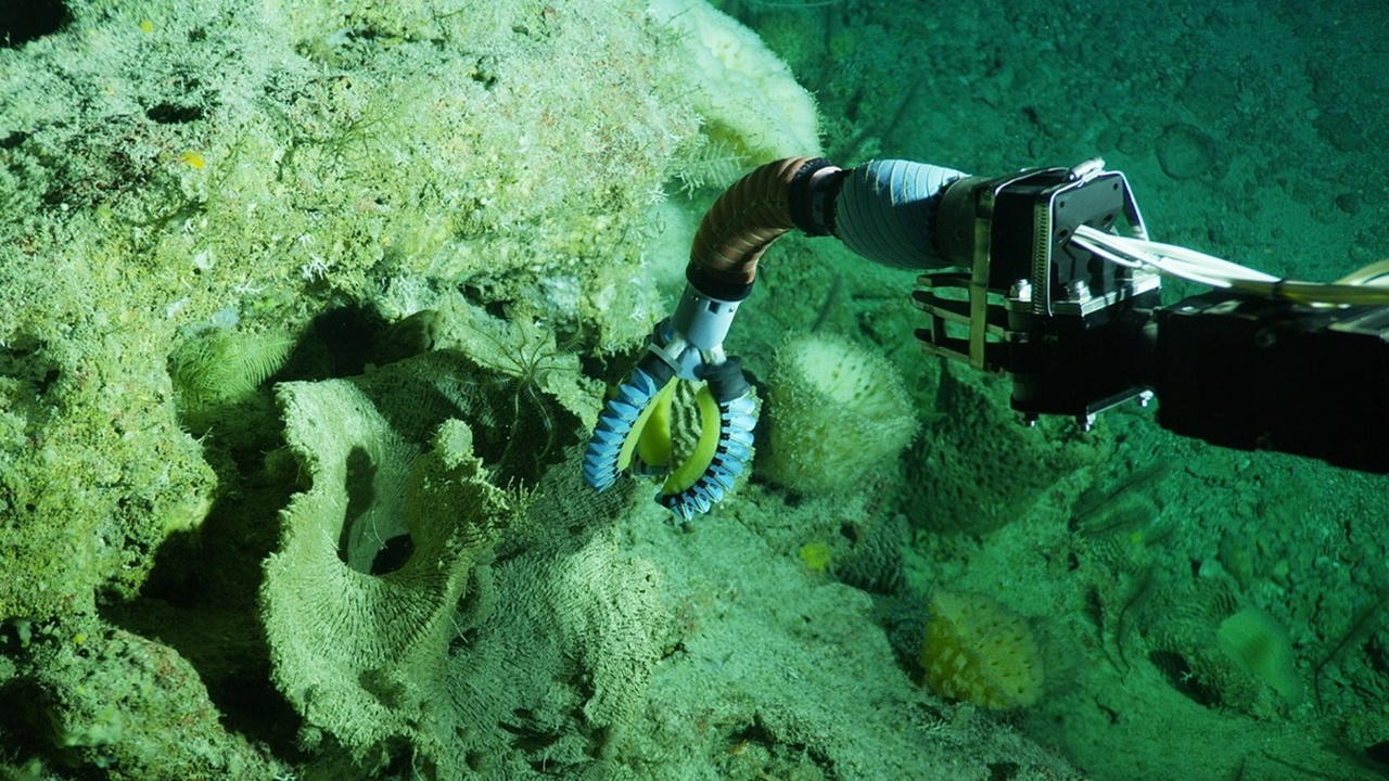 Максимум ловкости, минимум энергии: создана новая роботизированная система для морских биологов и медиков