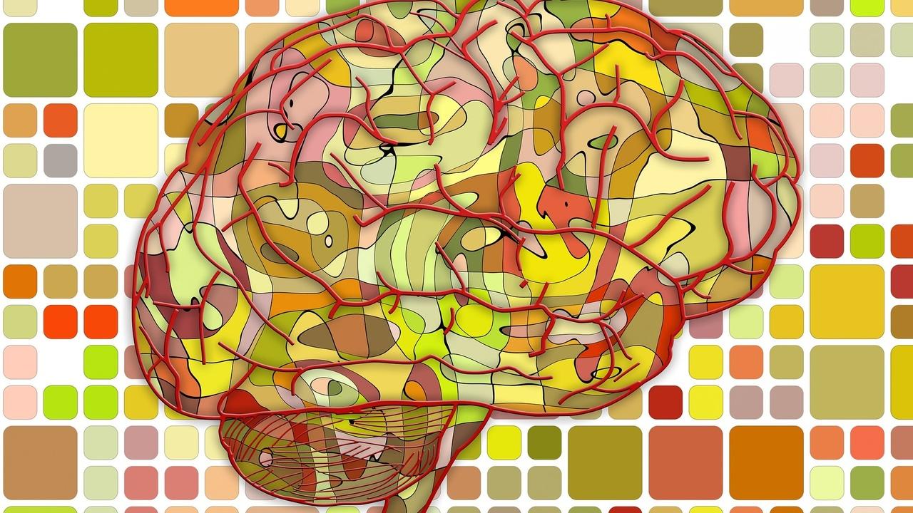 Увидеть то, чего нет: учёные разобрались, как мозг формирует иллюзии