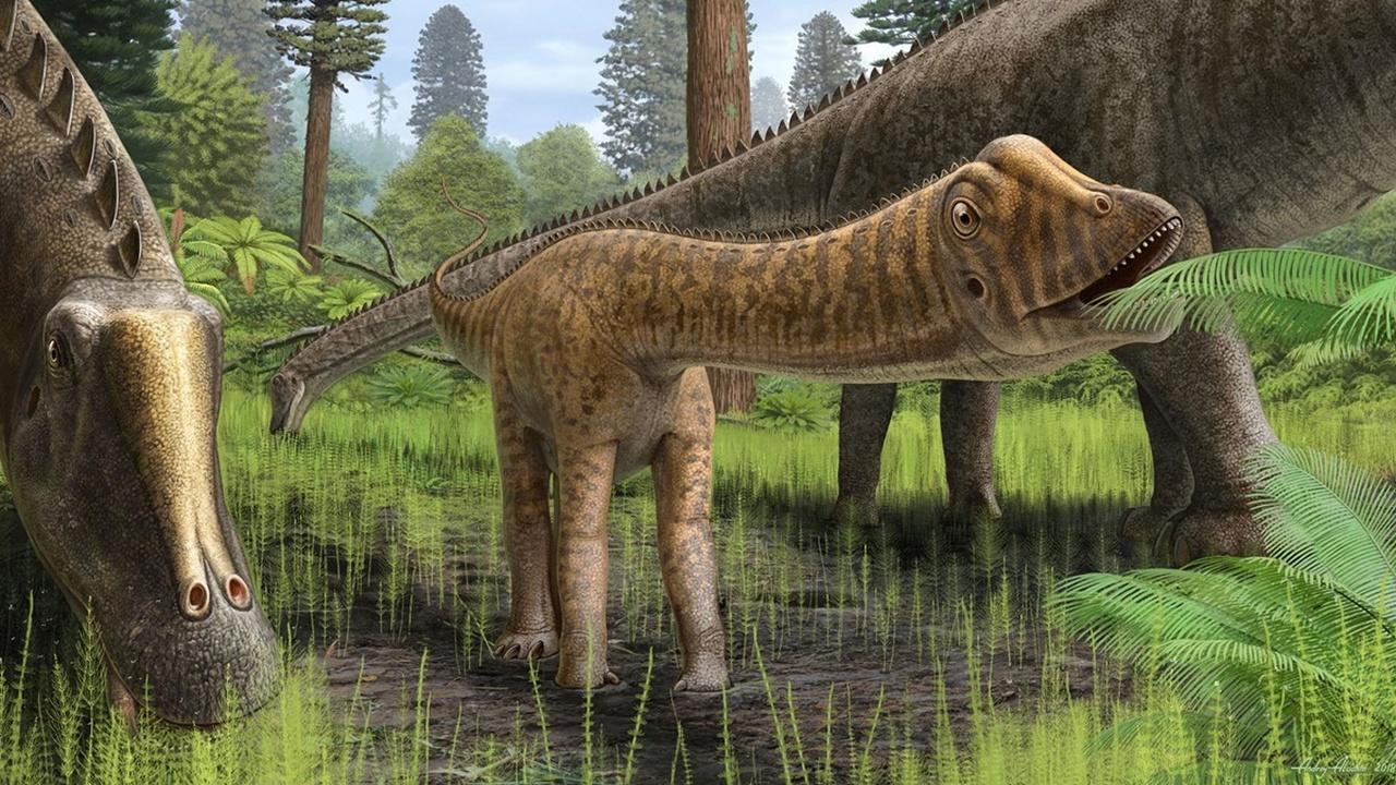 Быт юрского периода: останки диплодока Эндрю раскрыли новые данные о юности травоядных динозавров