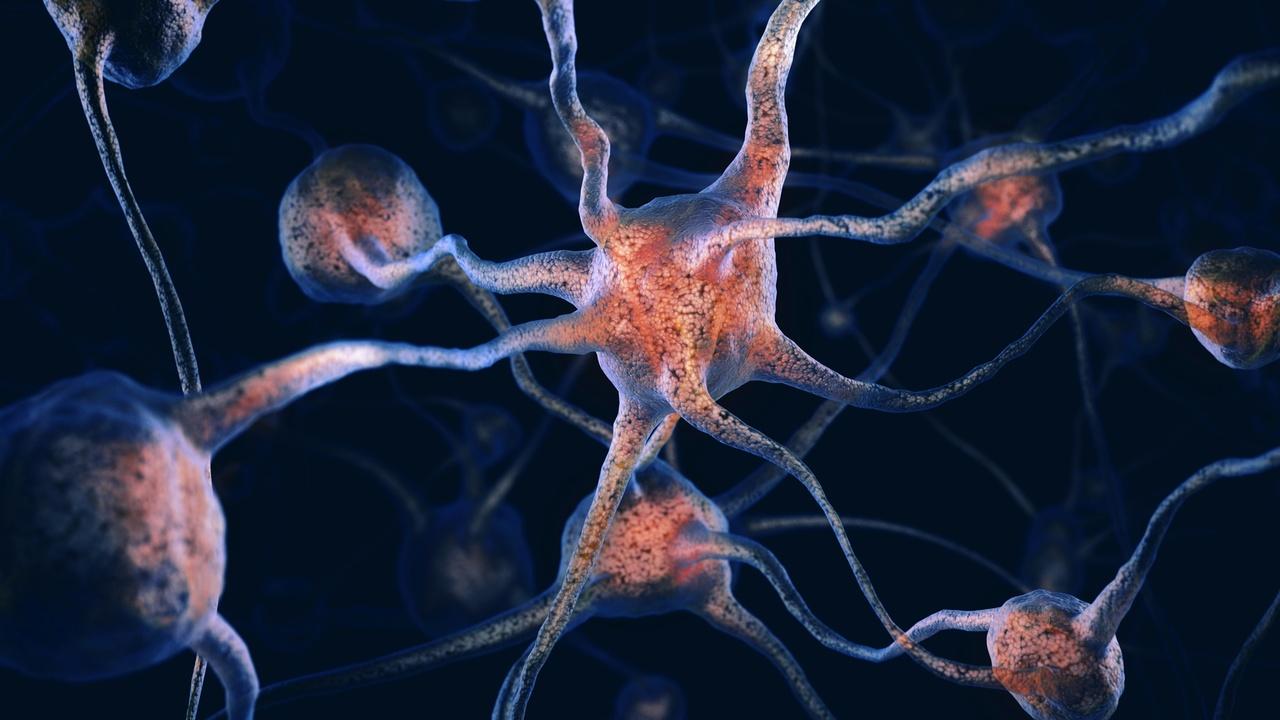 Нейробиологи определили, как человеческий мозг развил высокие интеллектуальные способности