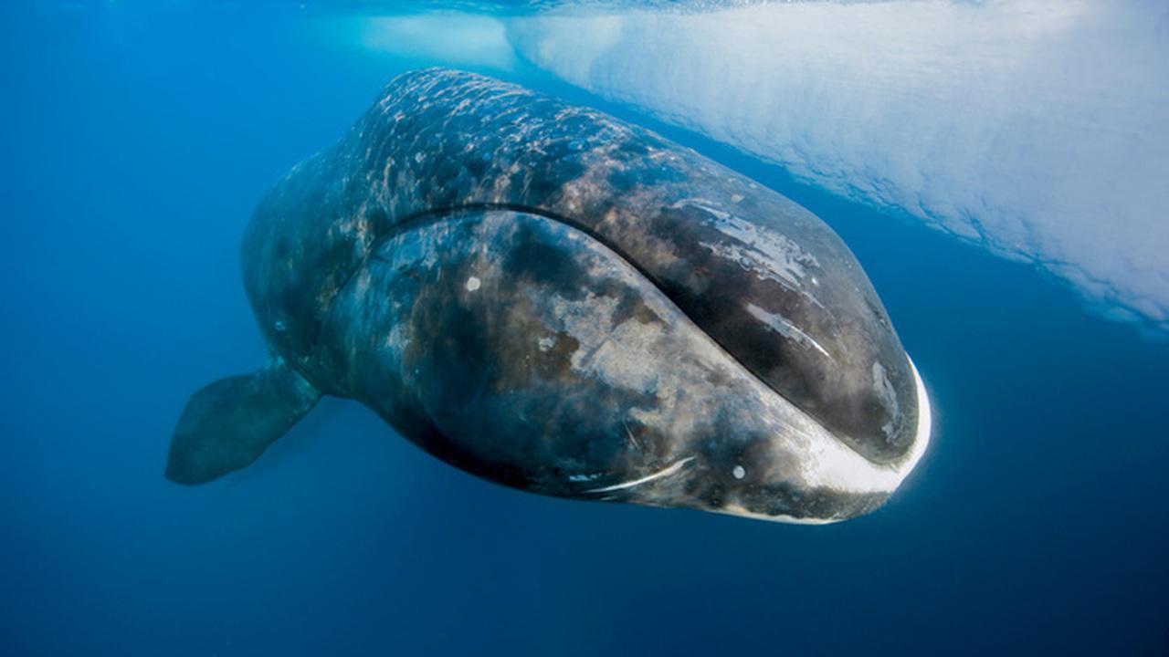 Археологи обнаружили место крупнейшей катастрофы в истории китобойного флота