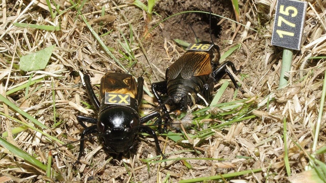 Стареют ли насекомые? Биологи нашли ответ