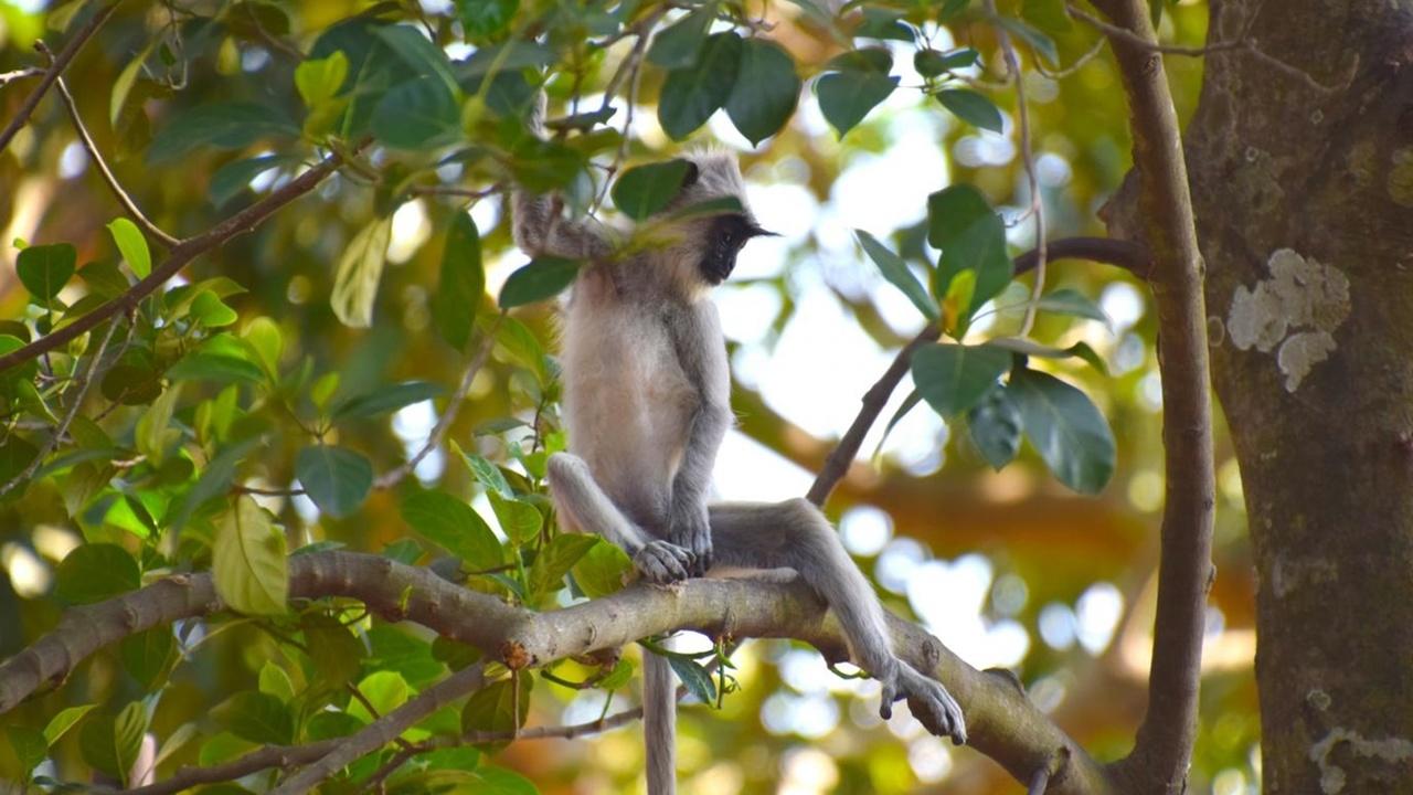 Древние люди выжили в тропиках благодаря охоте на обезьян и гигантских белок