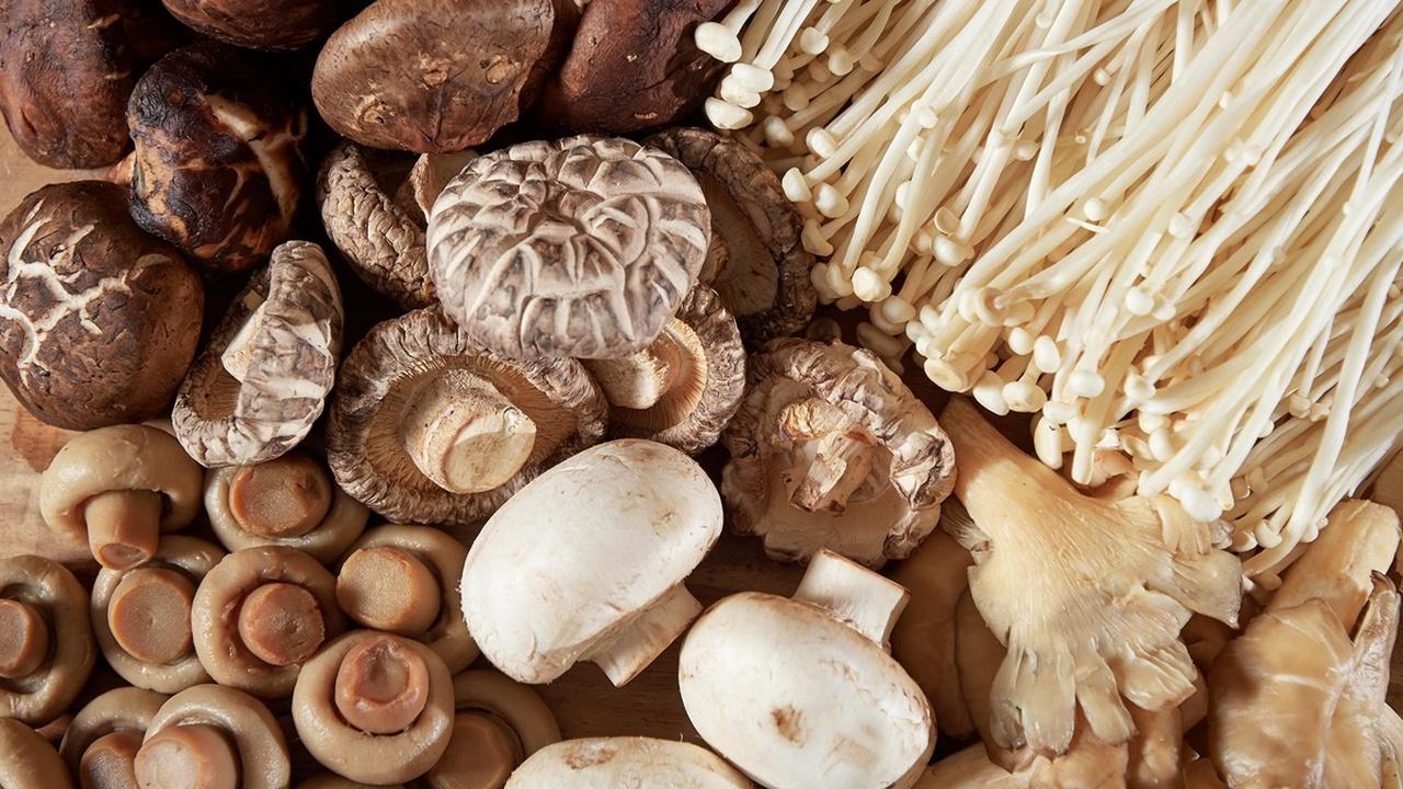 Учёные рассказали, как грибы защищают мозг пожилых людей от возрастных нарушений