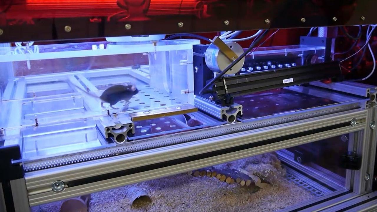 """Учёные создали для лабораторных мышей автономный """"умный дом"""""""
