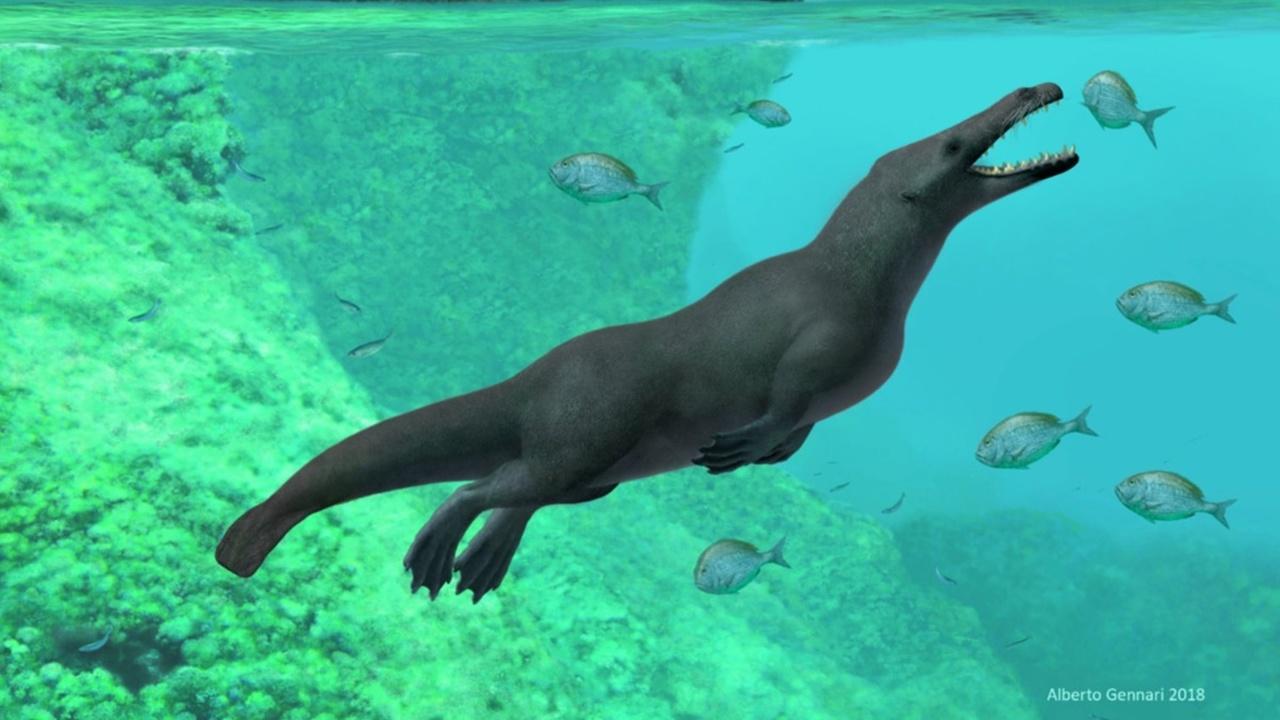 Древний четвероногий кит, похожий на выдру, обитал в Перу 42 миллиона лет назад