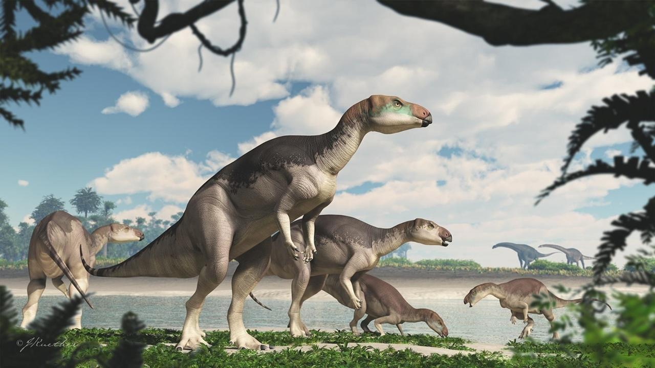 """В Австралии найдены останки семьи динозавров в драгоценной """"оправе"""""""