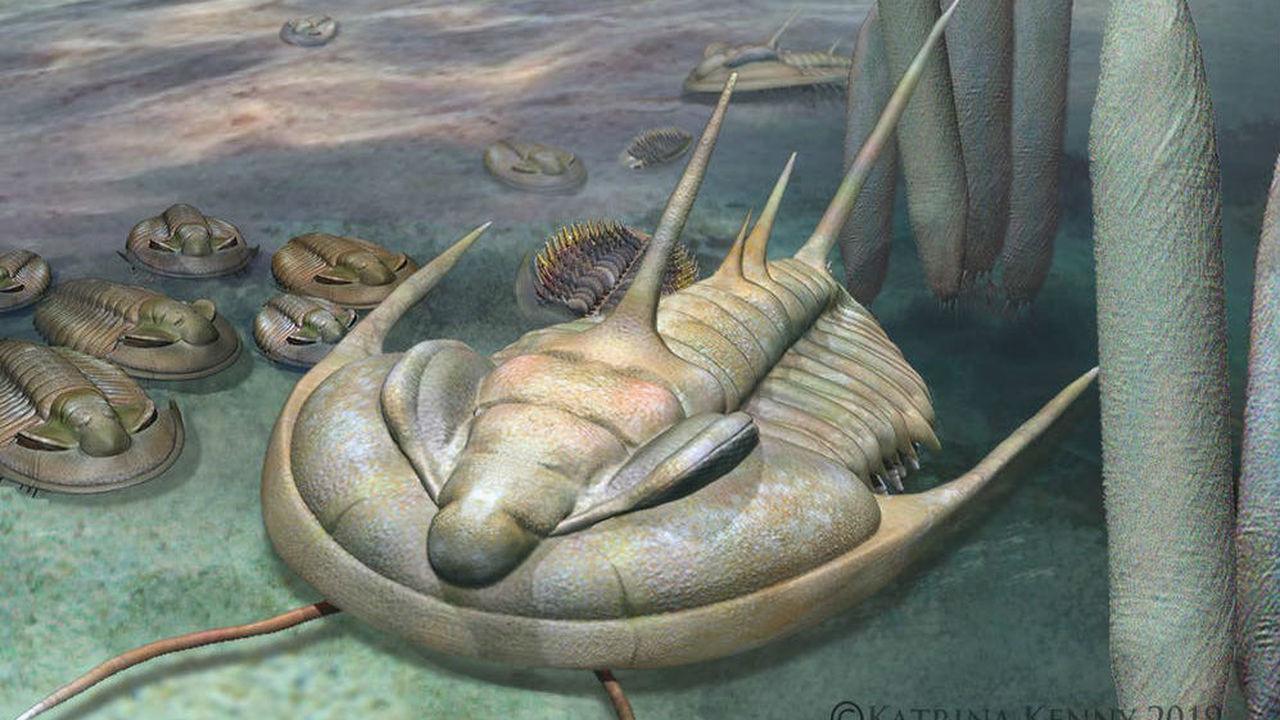 На острове Кенгуру найдены останки огромного трилобита-каннибала