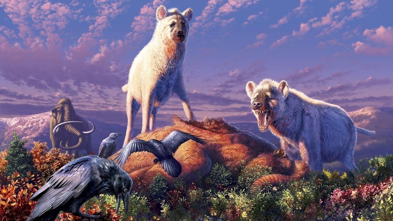 """""""А мы пойдём на север"""": останки древних гиен впервые найдены в Арктике"""