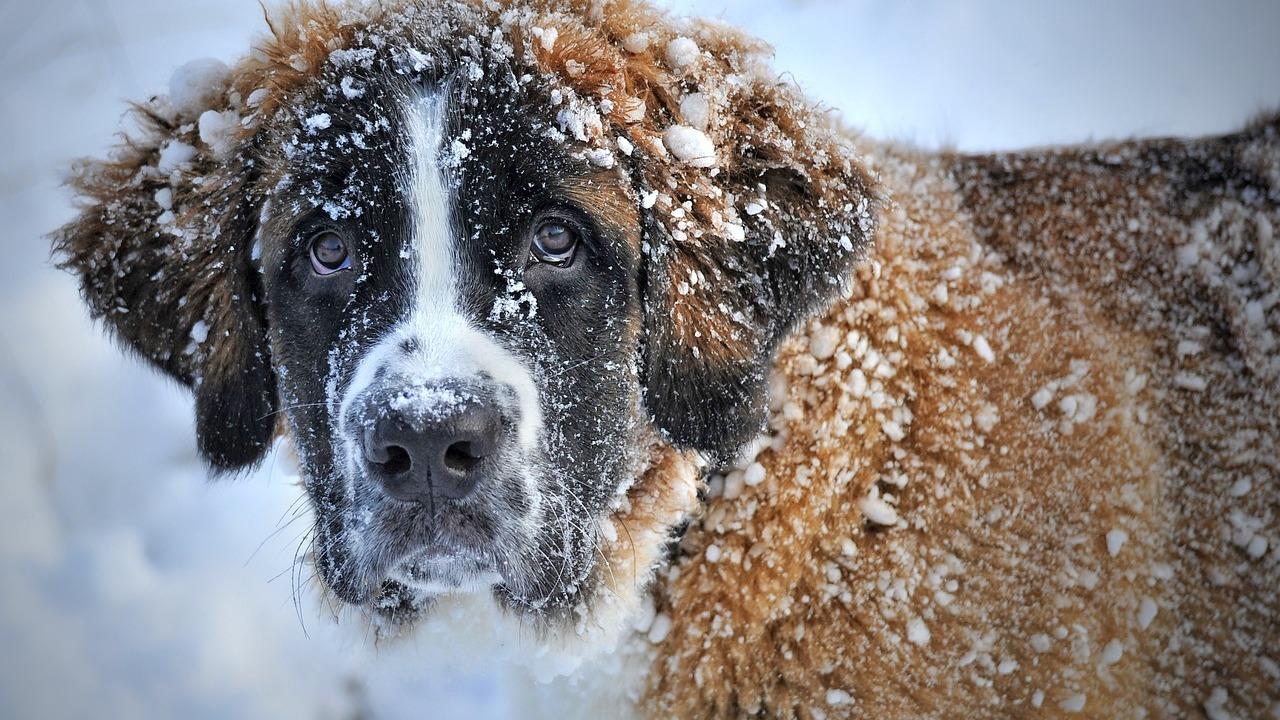 Служебных собак научили понимать язык прикосновений