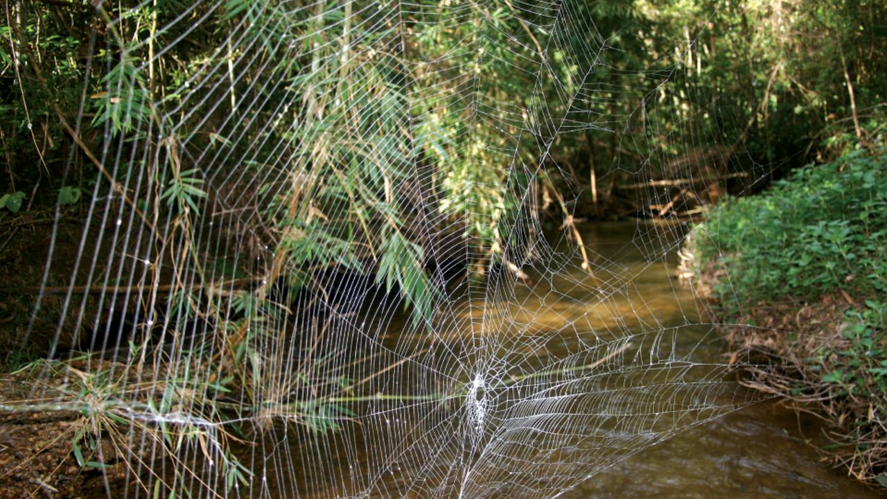 Самая прочная паутина в мире раскрыла свои секреты